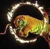 Цирки в Приютном