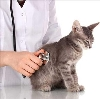 Ветеринарные клиники в Приютном